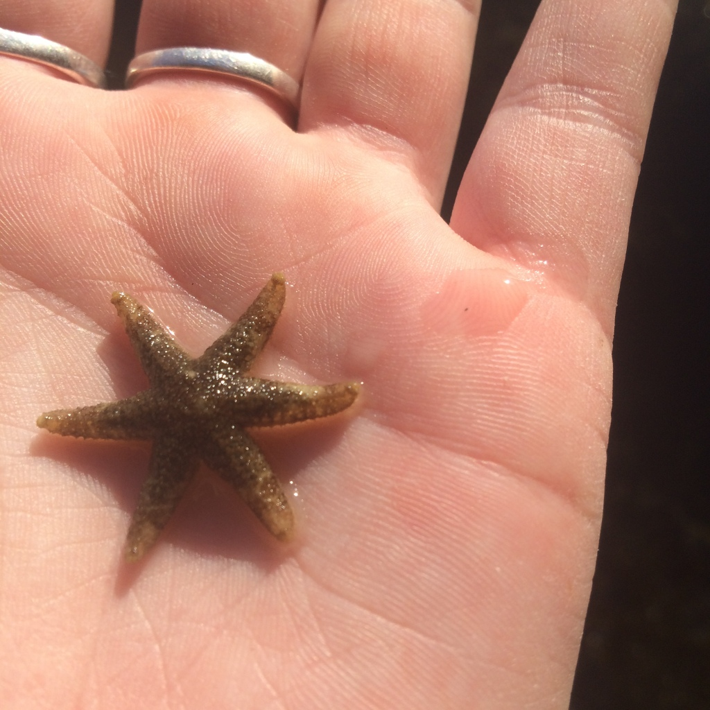 An adorable 6 leg starfish