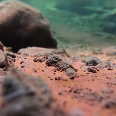 Underwater views of the pink algae that forms naturally in the hot springs.