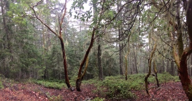 Some gorgeous views of the gangliod trees along with some really great Old Man's Beard moss.