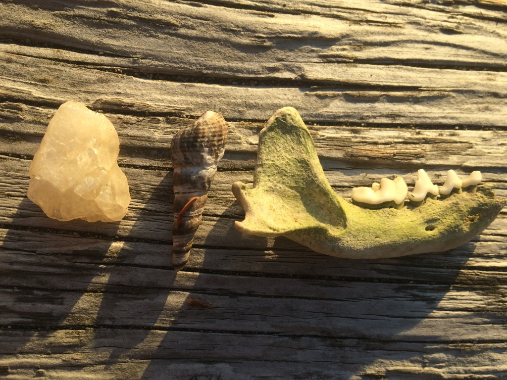 A random assortment of things I found on the beach