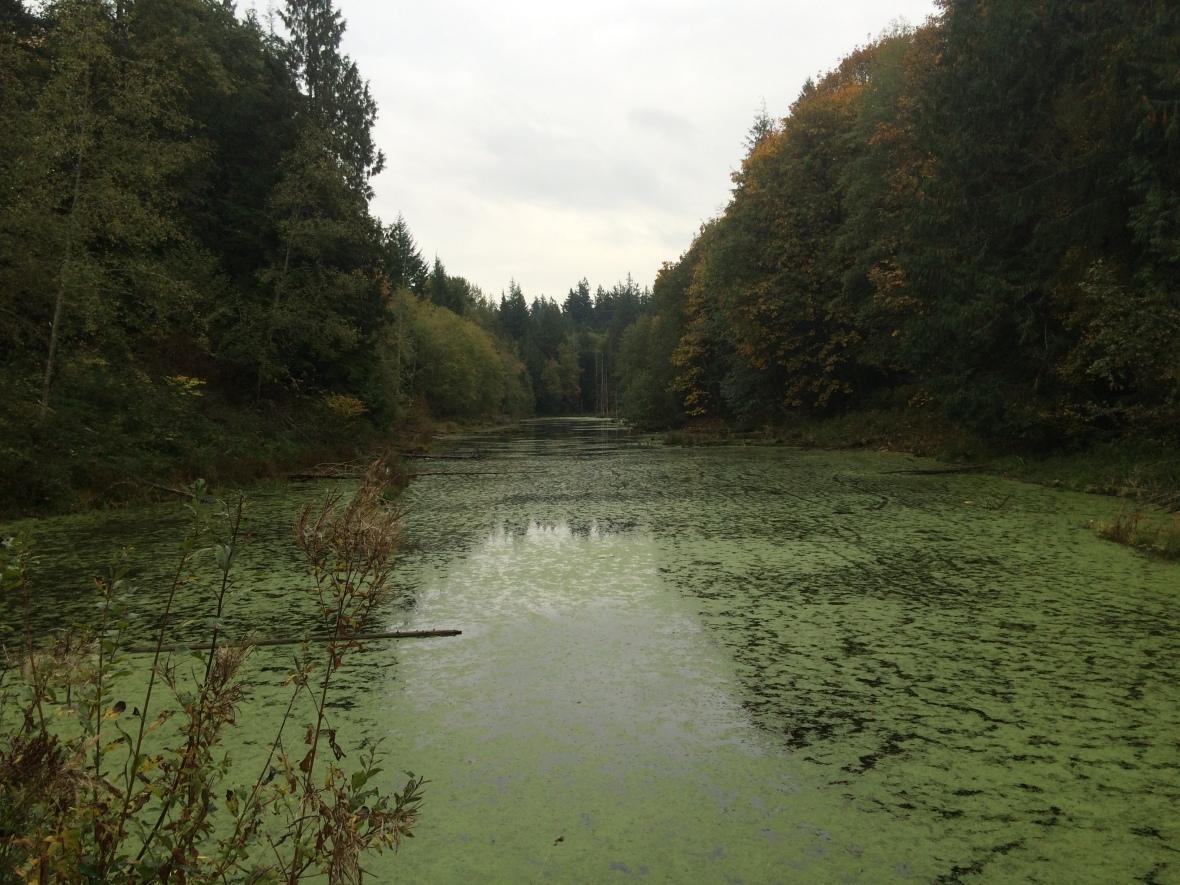 Geneva Pond
