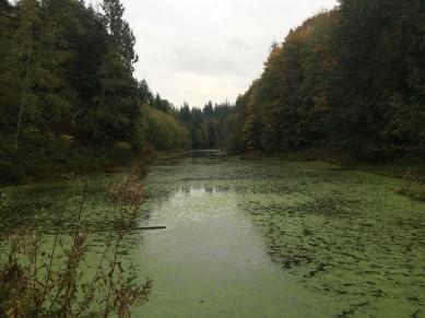 Stimpson Nature Reserve, Washington