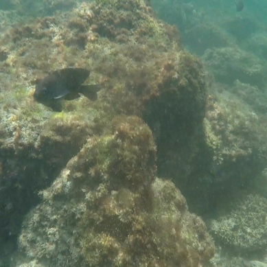 fishe1