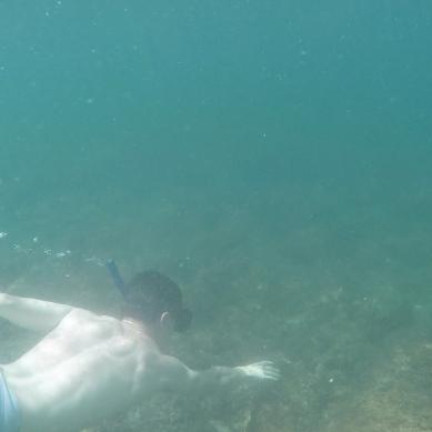 t 5 dive